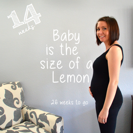 My Baby Bump Week to Week: 14 Weeks - Runaway Teacher